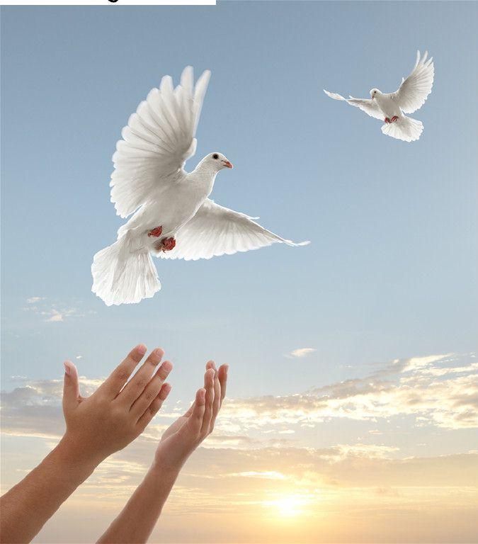 serving houston tx texas white dove release
